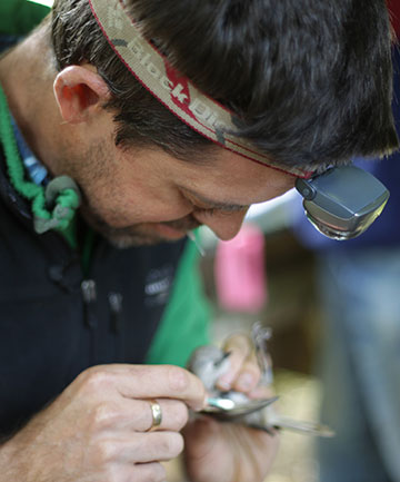 IN A FLAP: Conservationist Kevin Parker inspects a whitehead bird on Little Barrier Island.
