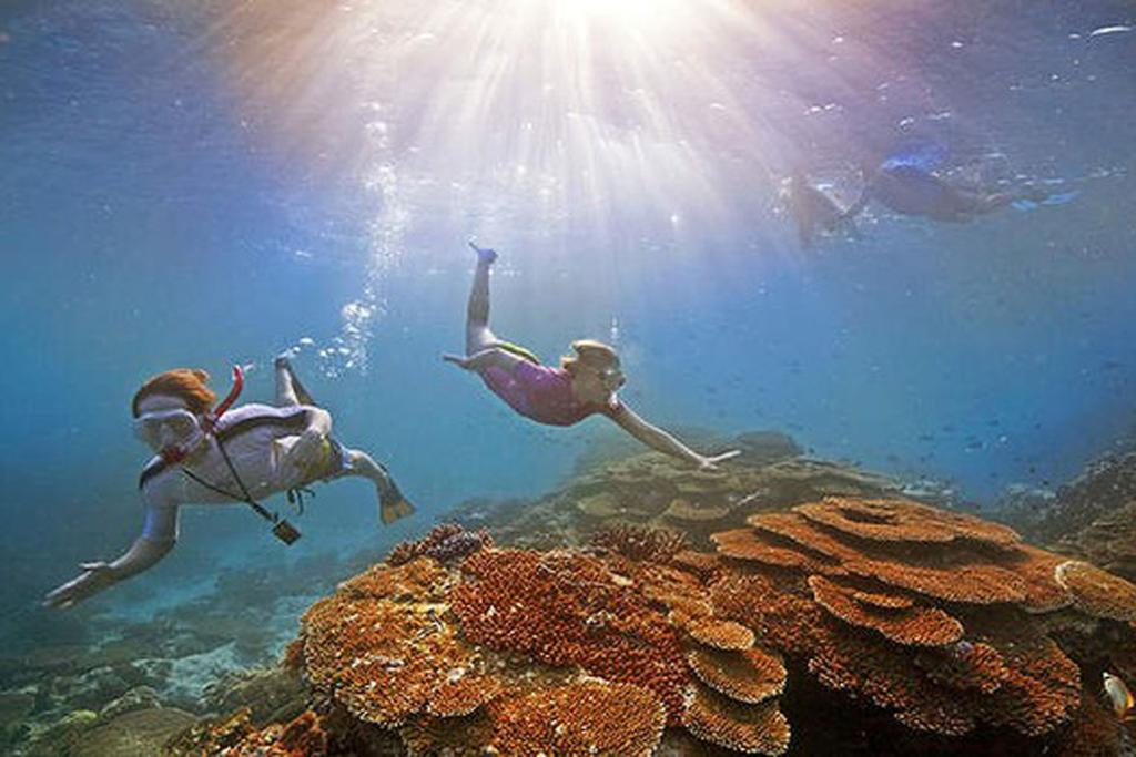 DIFFERENT WORLD: Snorkelling at Great Barrier Reef.