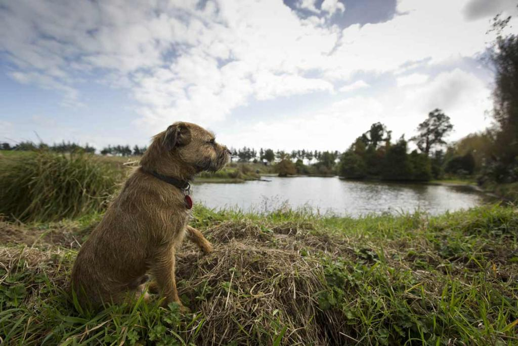 Oscar, the three-year-old border terrier belonging to John and Diny Dermer watches over the farm.