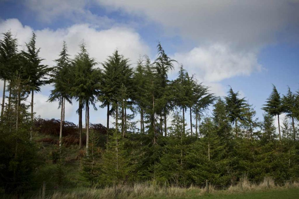 Trees on the property of John and Diny Dermer, winners of the North Island farm forestry award.