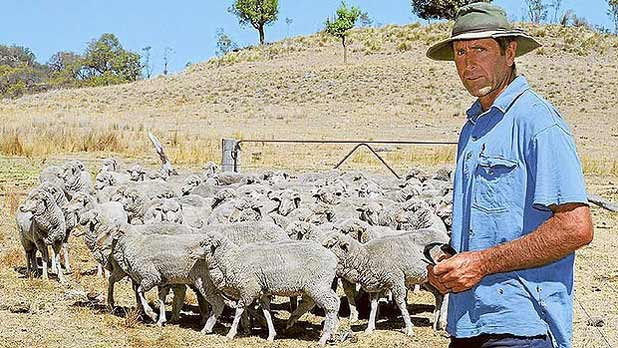 Farmer Stephen Knight, from Tannabah, Coonabarabran, with some of his Merino wethers that have been eating darling pea.  Read more: http://www.smh.com.au/environment/animals/crazed-sheep-die-like-heroin-addicts-20140516-38dpr.html#ixzz31pmQAX3f