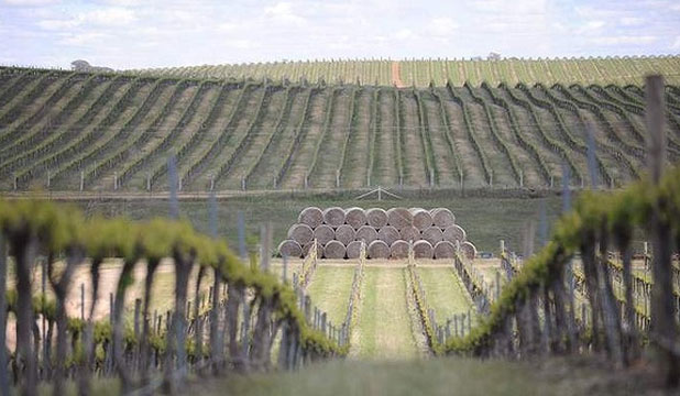 IN ORANGE: Cumulus Wine Estates is surrounded by rolling hills of volcanic soil.