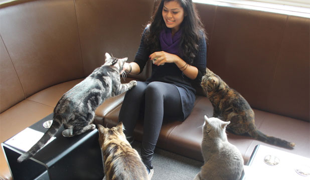 Melbourne Cat Cafe