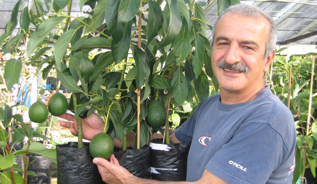 avocado grower