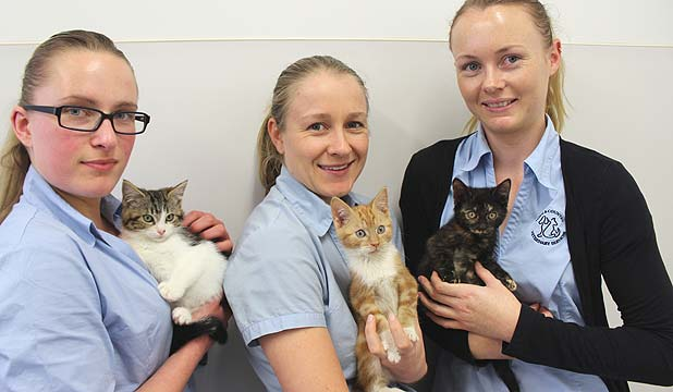 Nurses and kittens