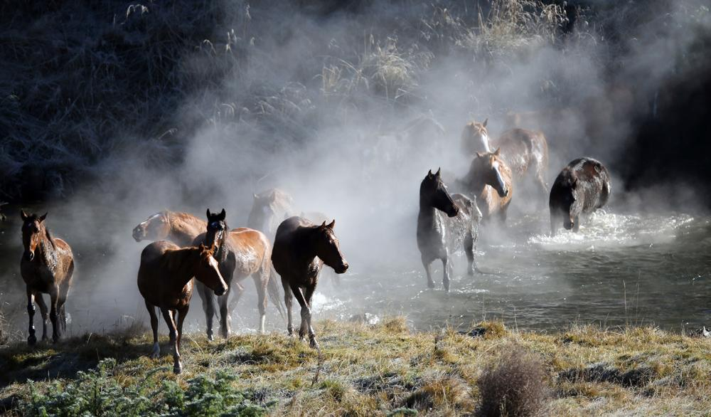 Homes have been found for almost all the wild Kaimanawa horses rounded up on Tuesday.