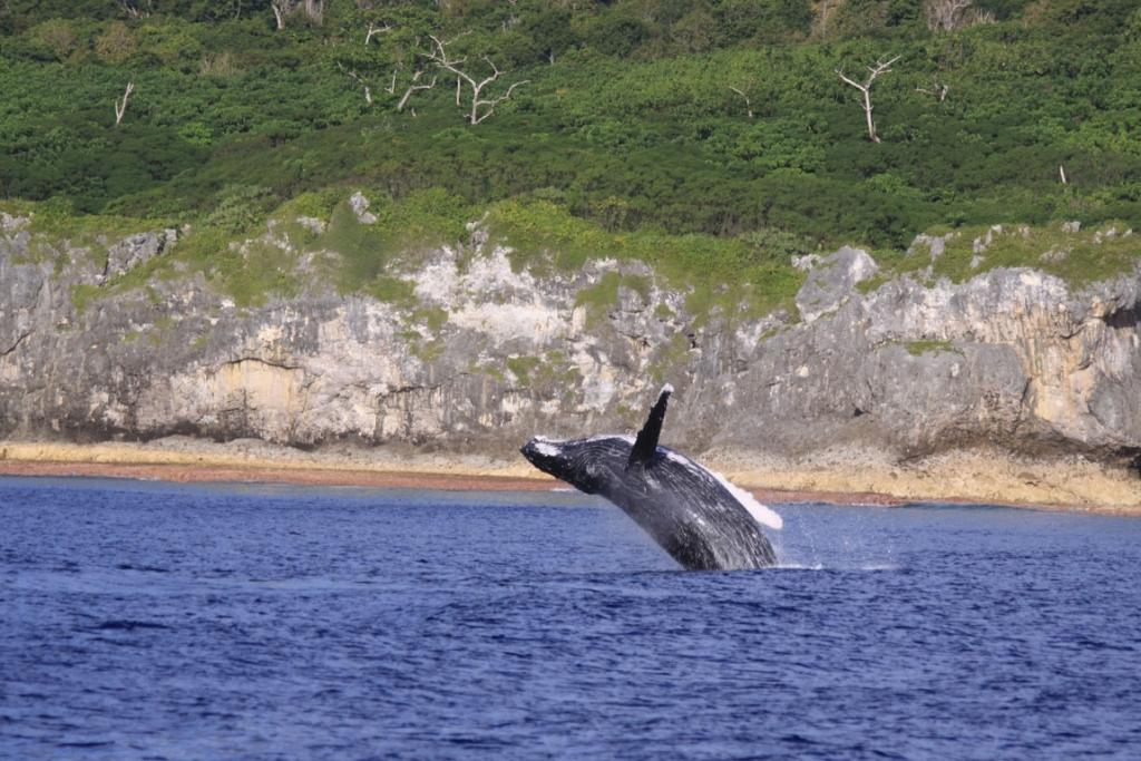 Niue's whale-watching season starts in June and ends in October.