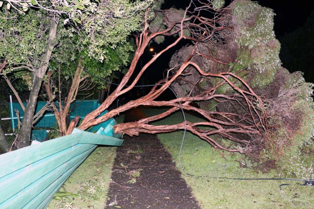 Tree down at Kelston, Auckland.
