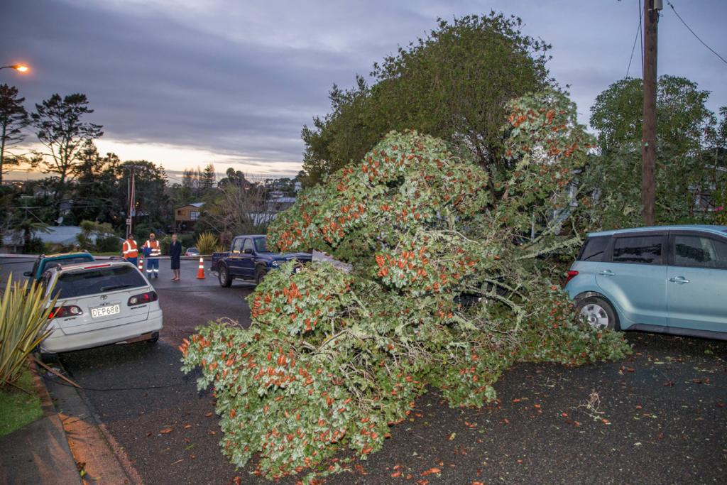 These cars escaped serious damage from a blown down tree in  Roland Hill Rd, West Auckland.