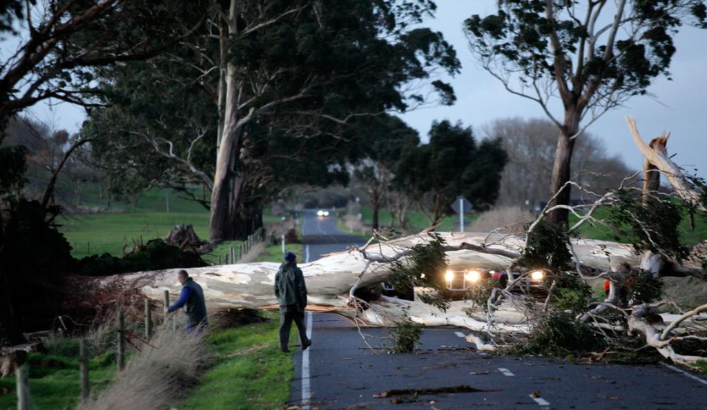 The storm brought down this gum tree down across Boyd Rd, in Waikato.