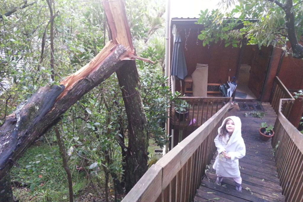 """""""How close was this? If the tree had fallen the other way then say goodbye to our roof!"""" said Brett Ihaka of Titirangi."""