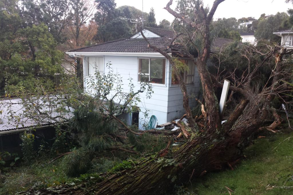 A falling tree damaged the roof of this North Shore house and destroyed the clothes line.