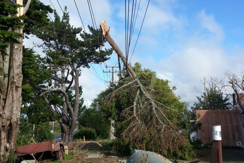 A pine tree branch fell on power lines on Auckland's North Shore.