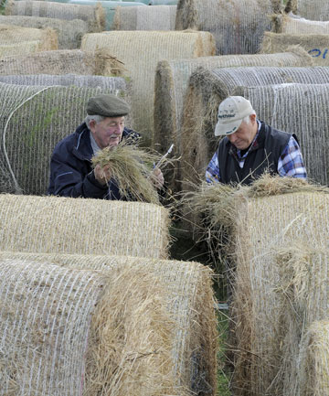 Te Anau Lions Club's hay and baleage competition
