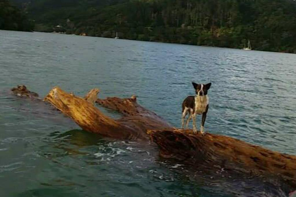 Feeling ruff? The castaway canine is spotted by the navy.