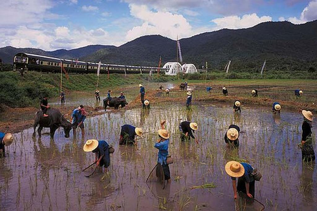 PASSING THROUGH: The train goes past workers in a rice field.