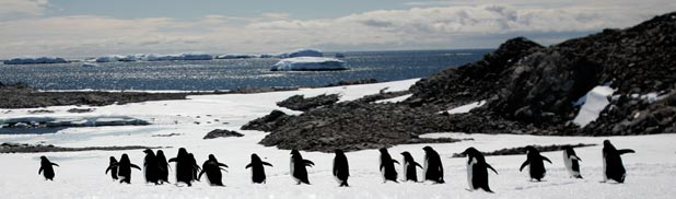 POPULAR SPOT:  An Australian scientist says Antarctica needs more protected areas to better guard against the threat posed by a booming Antarctic tourism industry.