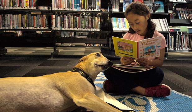 GAINING CONFIDENCE: Aydenn Franklyn's reading has improved dramatically since she started to read to Roo the greyhound.