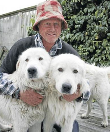 Tim Farrell leaves his maremma dogs Hunter and Hindmarsh in the paddock overnight to protect his sheep from rustlers.