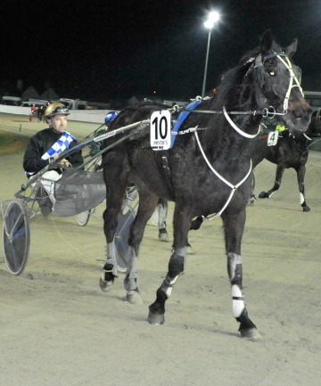 BIG WIN: Monnay (Matthew Williamson) who overcame a 60m handicap to win at Forbury Park on Friday night.