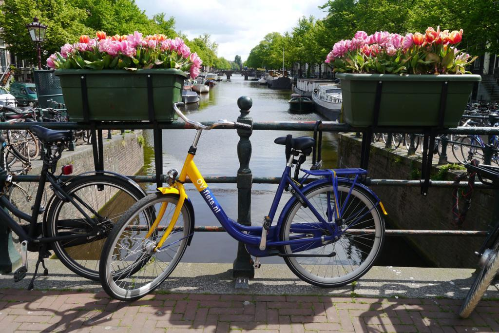 Seeing Amsterdam in bloom: Hop on a bike and explore the canals in the early spring sunshine.