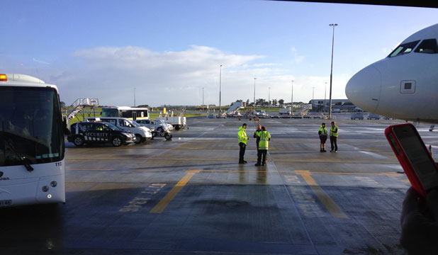 Birdstrike at Auckland Airport