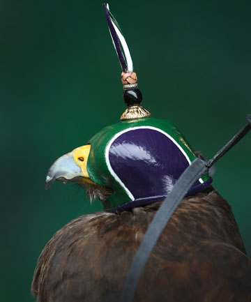 POO POLICE: Rufus, a Harris Hawk, is tasked with keeping pigeons at bay during Wimbledon.