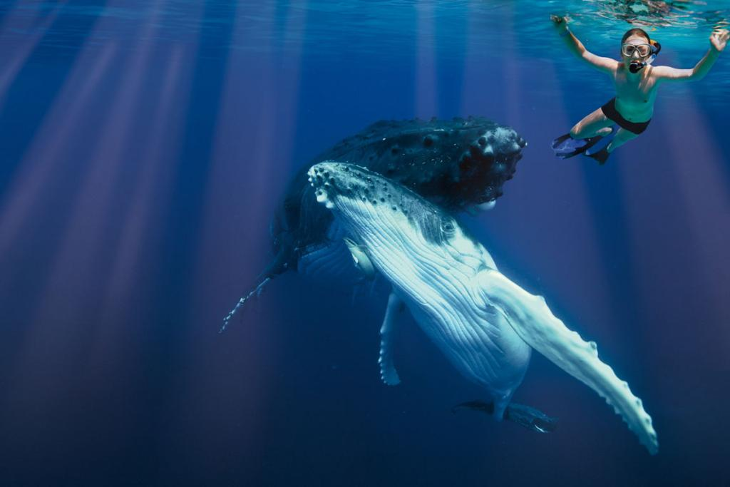 Relatively new in Tonga, where whales used to be hunted, whale watching is raising awareness of conservation.