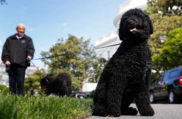BLACK DOGS: Not everyone doesn't like black dogs. President Barack Obama's Portuguese water dogs Bo and Sunny get a walk on the South Lawn of the White House in May.