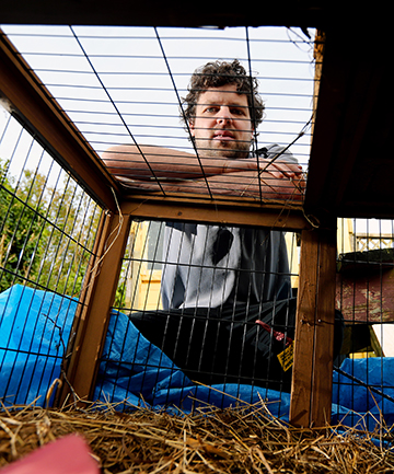 DOG DAY: Josh Lowe says the two dogs which forced their way into his daughter's guinea pig hutch and killed her two pets in New Plymouth should have been rehoused or destroyed and not released to their owner.