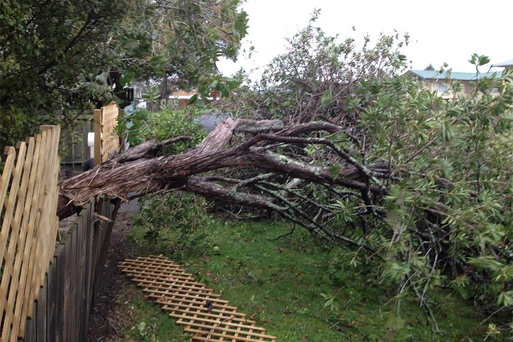 A tree felled by the storm overnight in Maire St Whangarei.