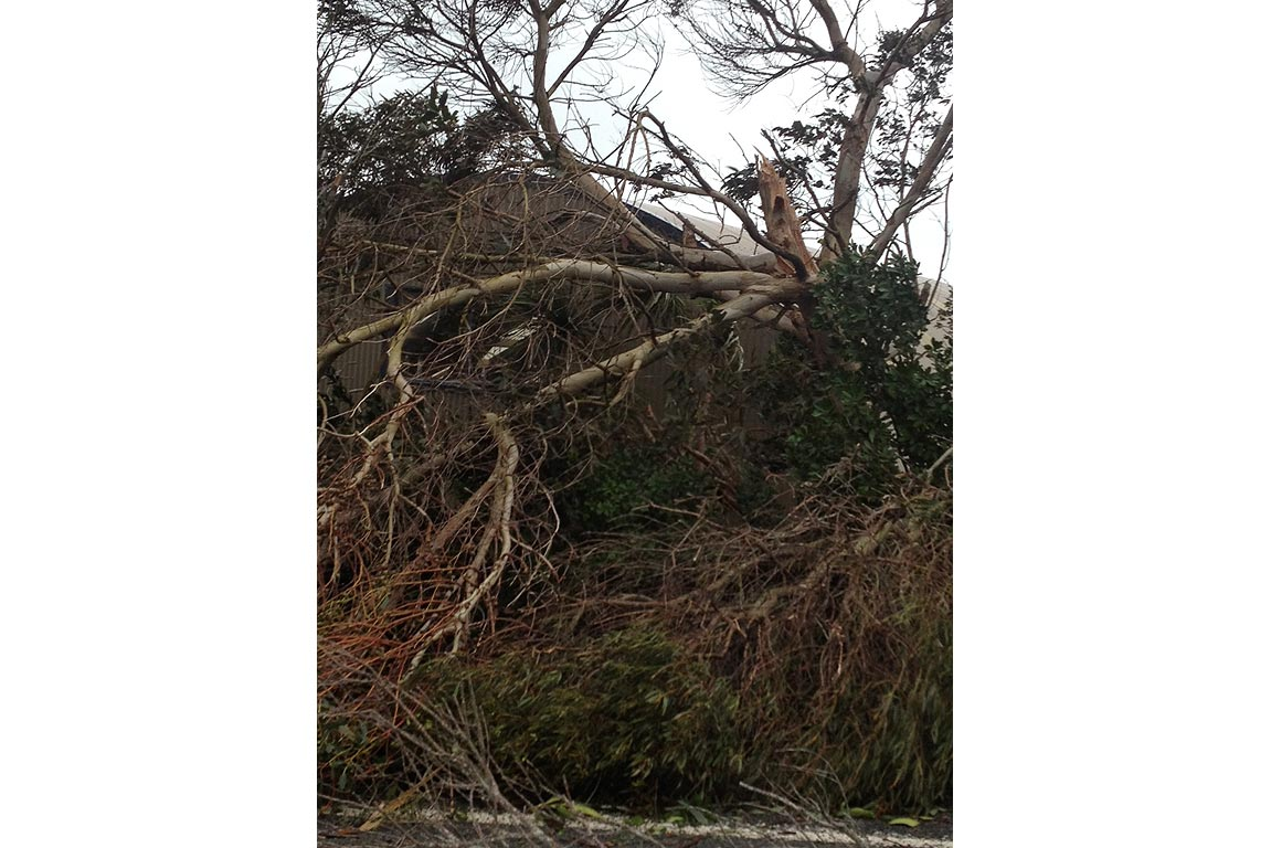 A tree blown over by high winds near Waipu.
