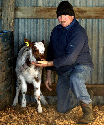 Dairy farmer David Wood and his week-old heifer calf, which was born following an embryo transfer from a Canadian bull and cow.