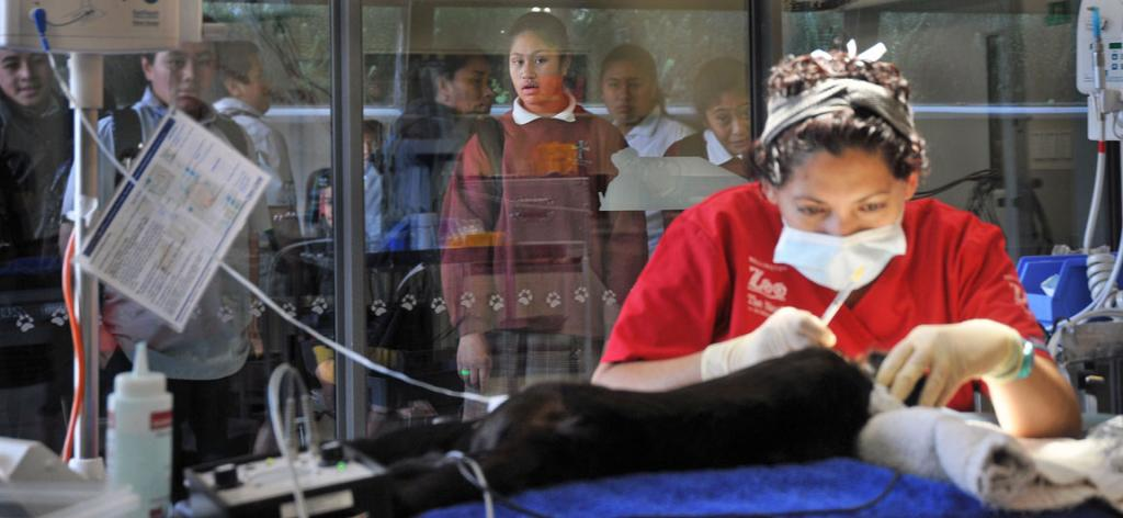 Wellington Zoo resident vet Serena Ferguson checks the teeth of a Capuchin monkey in The Nest Te Kohanga animal hospital while St Michaels School pupil Faytra Faafoa, 10, looks on with her classmates.