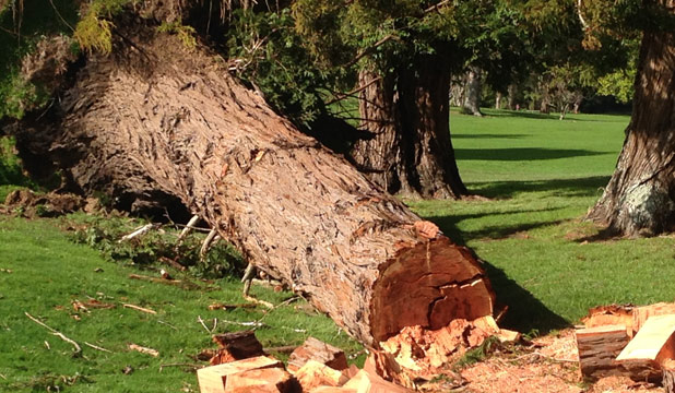 BLOWN AWAY: About 30 trees came down on Te Aroha Golf Course in last week's storm.