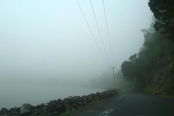 Fog in Little Huia.