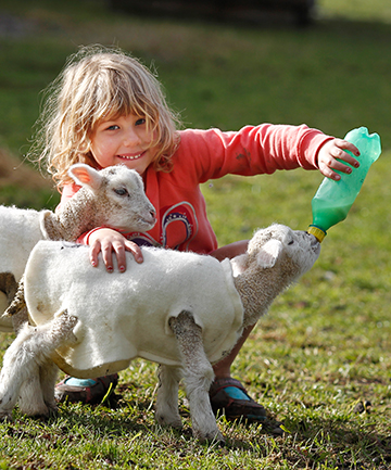 TUCKING IN: Skye Sherris, 5, feeds two 48-hour-old orphan lambs, Fred and Samantha, on her family's farm at Fairview.