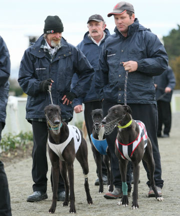 MILESTONE: Deane Stapleton, right, a strong supporter of greyhound racing at Ascot Park, is on 99 wins for the season.