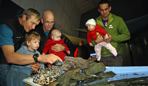 LOOK THERE: David van der Gulik with Caleb Fenselan, 2, Ben Fenselan with five month-old Toby and Chee Joe with five month-old Aneeka explore EcoWorld in Picton during an Active Dads outing.