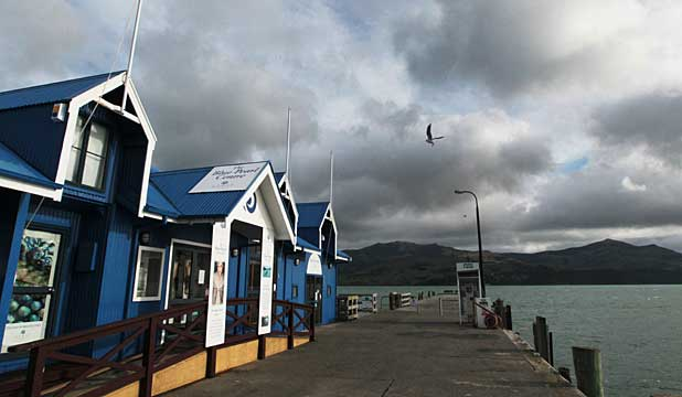 SCENIC: Akaroa wharf is not always bustling with wealthy cruise ship passengers.