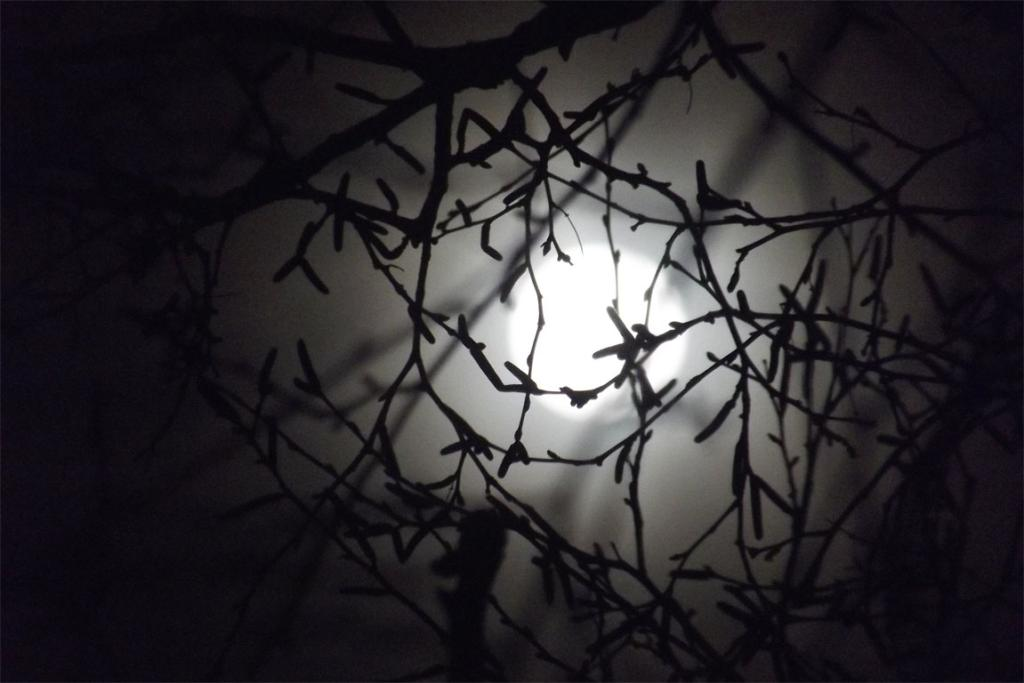 Debbie Brown snapped this pic of the August Supermoon from Taranaki.