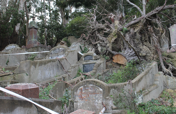 GRAVE SIGHT: Damage from a 2013 storm at Karori cemetery, 14 months after the event.
