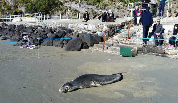 An unusual visitor has made an unexpected appearance on Christchurch's Scarborough Beach.