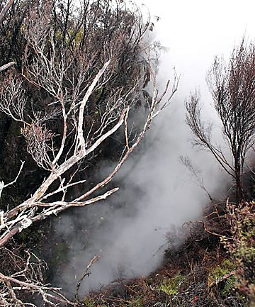 DENNISTON PLATEAU: Forest and Bird staff have photographed smoke coming out of several cracks above a historic mine shaft.