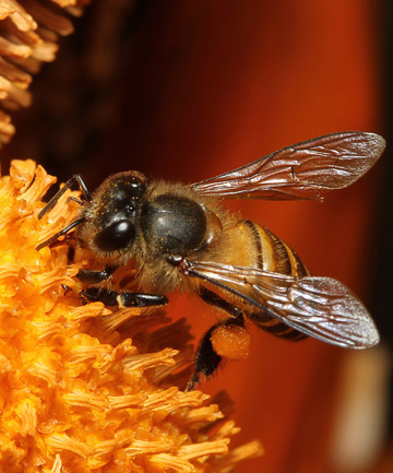 AT RISK: An international task force of independent scientists completed a four-year analysis of 800 peer reviewed papers on systemic pesticides and found conclusive evidence that neonics are causing significant damage to bees, butterflies, earthworms and birds.