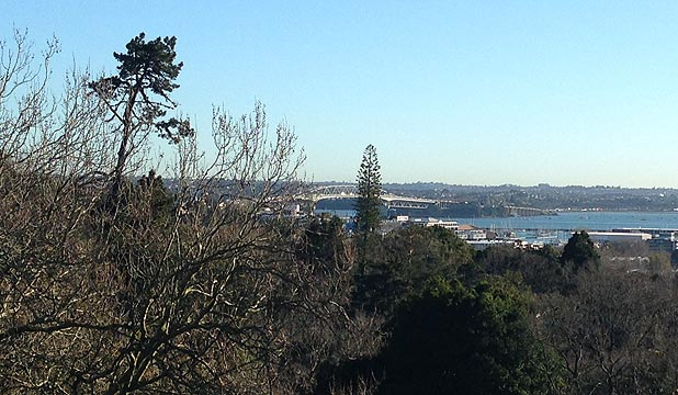 SUNNY: Auckland's harbour bridge through the trees in Ponsonby's Western Park this morning.