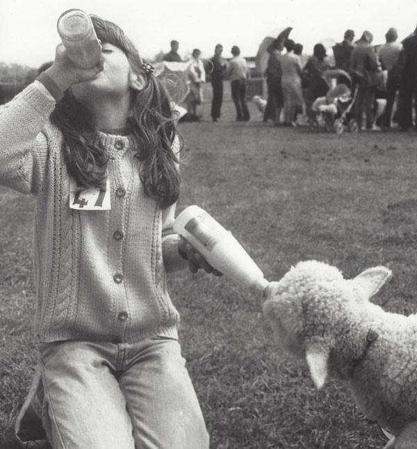 Thirsty work: Rowena McCoy, aged 12, in October, 1984, at the Koromatua School Calf Club Day, or Agricultural Club Day as it was called by the Waikato Times when the paper snapped this photo for publication.
