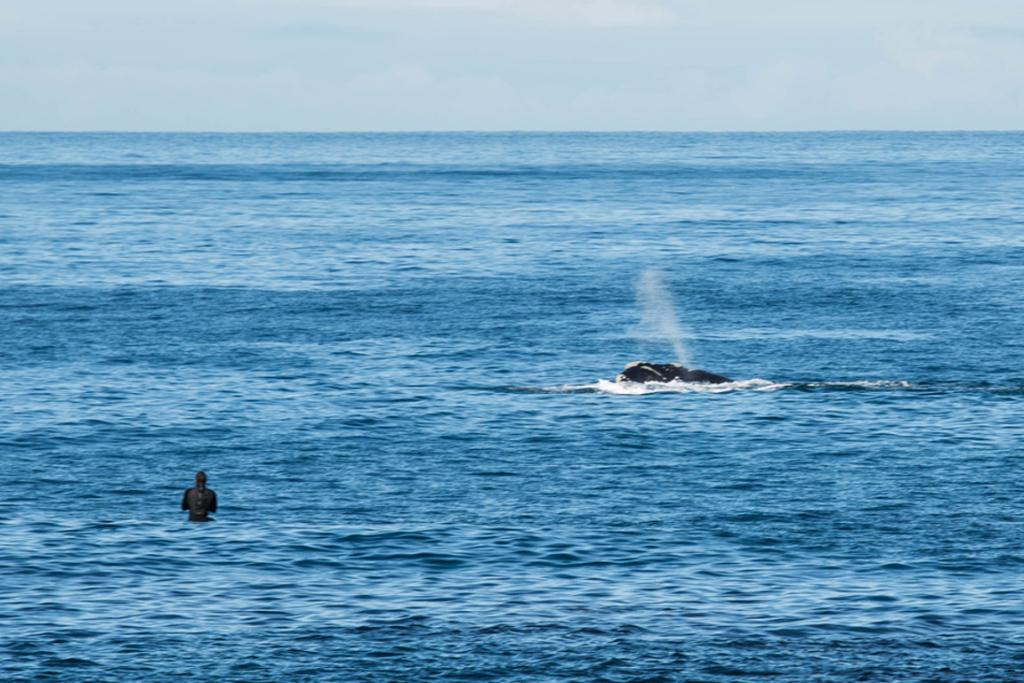 Whale off south coast