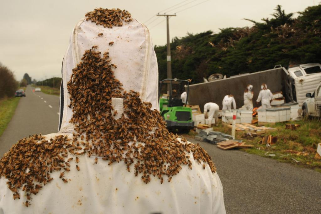 Bees swarm over a person cleaning up after a truck carrying beehives crashed near Carterton.