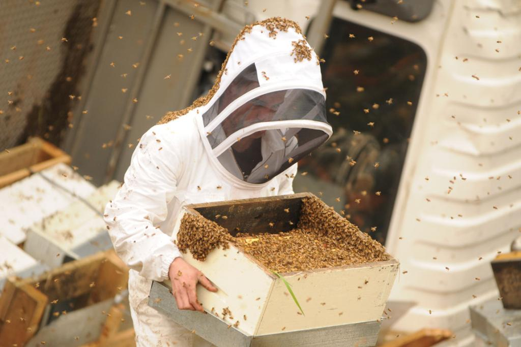 Part of a beehive is carried away in the clean up after a truck carrying beehives crashed near Carterton.